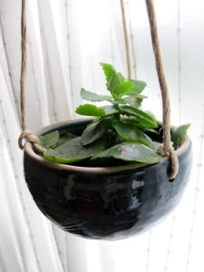 indoor-hanging-plant-pot-decoration-idea-for-hallway-makeover-indoor-plants-and-mini-garden-setups-to-inspire-you-how-to-plant-an-indoor-vegetable-garden-small-indoor-garden-indoor-cat-garden-plants